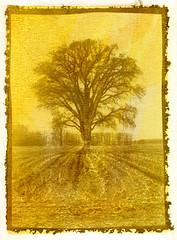Salt Print: Tree