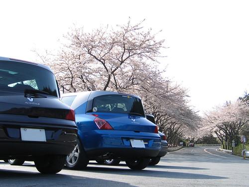 Sakura Meeting 2006-8