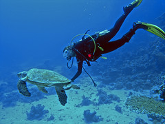 Mónica and the turtle (Red Sea)