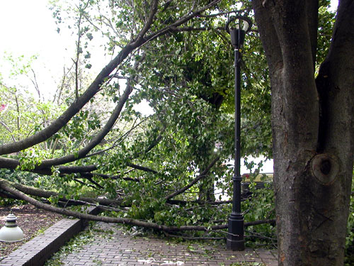 fallen_tree3_day