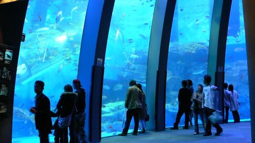 Hakkeijima Aquarium
