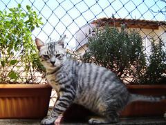 nuno II (sosgatinhos) Tags: love cat furry feline extreme gato felino makeover neko shelter adoption adoo peludo adote abrigo animalwelfare catlover sosgatinhos