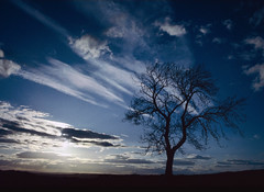 The Lone Tree (Rod Monkey) Tags: sky cloud tree silhouette landscape scotland interestingness327 i500 specland specnature elsrickle superaplus aplusphoto superhearts rodirvine