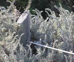 P4244809 (sparrows mama) Tags: sanfrancisco california fortfunston
