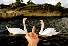 Swans are Evil (coreyfishes) Tags: sea copyright color norway alaska photo fishing fisherman all arnold picture crab corey commercial rights catch reserved 2007 rollo bering deadliest coreyarnoldcorey coreyfishes