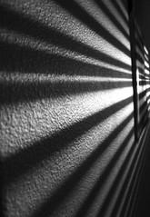 Shadows by Akash k