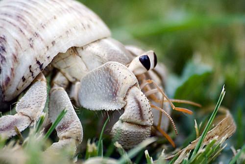 My hermit crabs - Eddie
