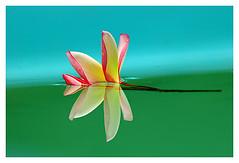 Floral (Ísis Martins) Tags: minasgerais brasil flor reflexo sitio
