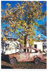 Sueo de otoo (silkegb) Tags: auto color fall car 35mm autum catchycolor entrerios fiat600 rosty urdinarrain