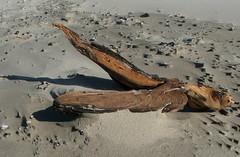 Hout op strand (capreolus) Tags: deleteme5 deleteme8 deleteme deleteme2 deleteme3 deleteme4 deleteme6 deleteme9 deleteme7 beach terschelling deleteme10 driftwood