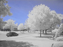 IR 1 (cloud.chaos) Tags: trees digital ir infrared streetscapes digitalinfrared allenpark cloudchaos