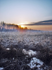 Good morning (Sameli) Tags: wood morning trees sky cloud sun mist cold tree nature water beautiful field misty fog clouds forest sunrise espoo suomi finland landscape rising frozen spring still woods skies silent silence fields plains rise hush plain forests scenicsnotjustlandscapes