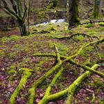 Exmoor - Horner Woods (3)