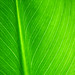 Let it be... green