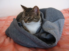 cat fleece