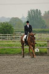 final turn... (nick3216) Tags: uk horse caballo cheval unitedkingdom cal chestnut pferde cavallo cavalo hest hevonen paard  hst dressage warmblood gelding  ko hannoverian myerscough