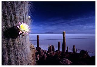 La Isla de los pescadores, Salar de Uyuni (Bolivia)