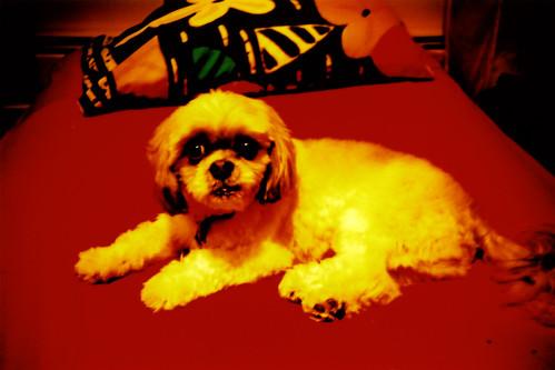 dog on red par Maya Newman