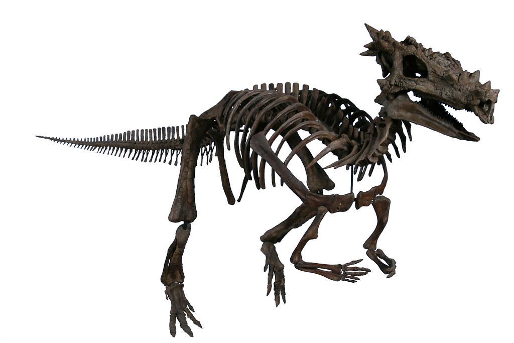 Qantassaurus  Prehistoric Wildlife