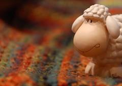 knitting (sifis) Tags: colour wool knitting sheep crochet knit merino athens yarn greece d200 18200 handknitting sakalak