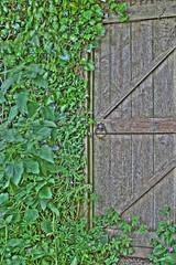 Wonder where this leads (Jon Law (Improvedimage.co.uk)) Tags: garden gate hdr 3xp photomatix tonemap jonlaw improvedimage
