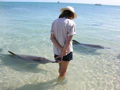 Australia.2004-10-25.0037 (DigitalTribes) Tags: 2004 au australia worldheritagesite dolphins westernaustralia dt monkeymia sharkbay digitaltribes markoneil