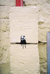 panda (i_gallagher) Tags: graffiti stencil panda norwich flickrmeet dribble idg