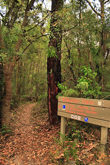 Path Junction (yewenyi) Tags: park nature sign digital forest geotagged nationalpark natural path sydney australia nsw newsouthwales aus stives kuringgai pc2075 oceania auspctagged kuringgaichasenationalpark pctagged greatersydney geo:lat=33705393 geo:lon=151173559 wildflowergarden