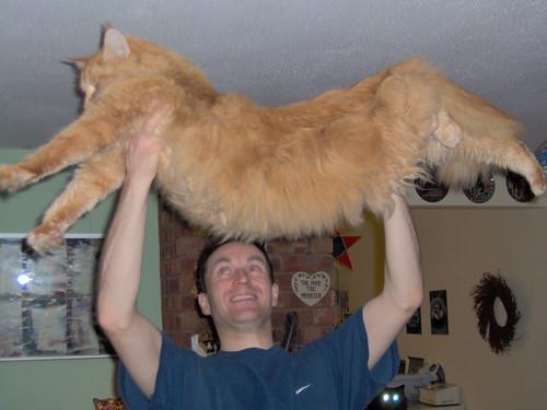 up my orange cat called