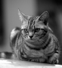 Glance (daita) Tags: bw animals japan cat hokkaido pentax gimp m42    istds  takia 80200