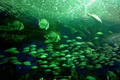Rush hour (Tetanus) Tags: underwaterworld