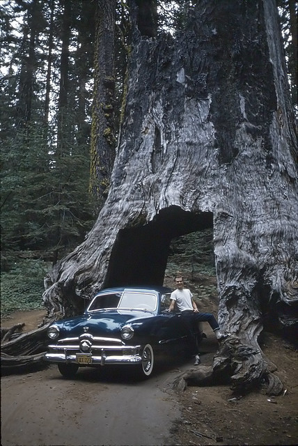 Tuolumne Grove, Yosemite
