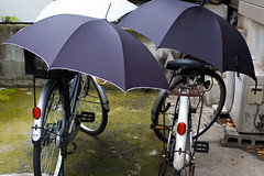 bicycles and umbrellas - IMGP0596