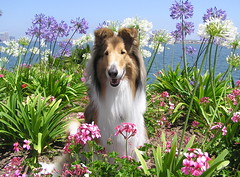 Summer's Here! (HowtoLoveYourDog.com) Tags: california flowers plants white plant flower water bay purple sandiego southern top20dogpix bloom agapanthus sandiegobay top20dogs lillyofthenile
