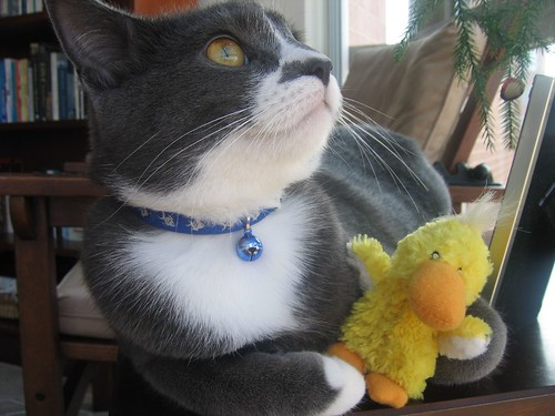 winston and his duckie