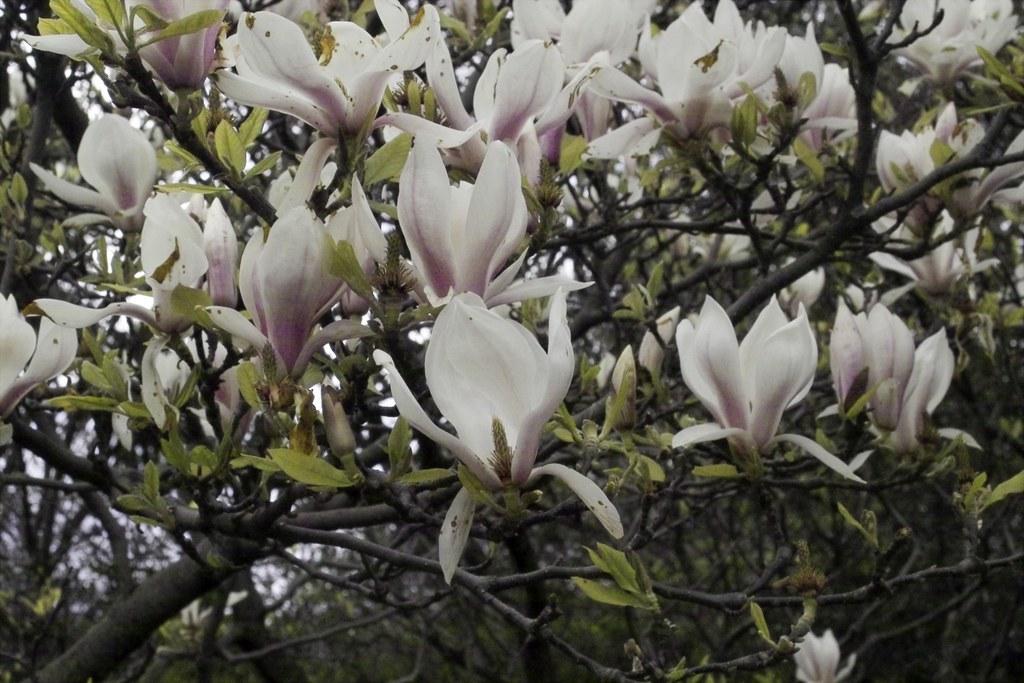 FLOWERS IN STEPHENS GREEN