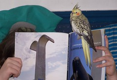 Well read (makeupanid) Tags: reading book loki cockatiel petbird wellread featheryfriday orcasforever commentonmycuteness marinelandofthepacific
