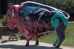 Painted Buffalo 2 (Ms. Kathleen) Tags: mountains southdakota blackhills rural buffalo custer paintedbuffalo
