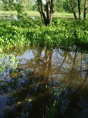 Petree  Island (pkohler) Tags: ottawariver petreeisland