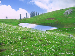 Mushkpuri Top