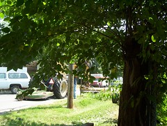 Lawn Wranglers - 1 (vantazy) Tags: lawn lawnmower mower