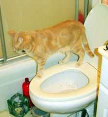 Milo takes a walk on the wild side (Malingering) Tags: cats pets cute animals fetish cat bathroom kitten feline milo kittens toilet cuteness 1995monthautomaticallyrenewing miloacceptsallmajorcreditcards