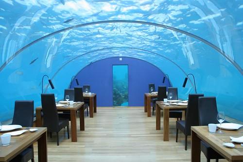 Maldives - Hilton - Underwater restaurant on Flickr - Photo Sharing! from flickr.com