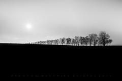 Black Avenue (matthiasstiefel) Tags: trees avenue allee sw schwarzweis bw black white december dezember bavaria bayern sun sonne