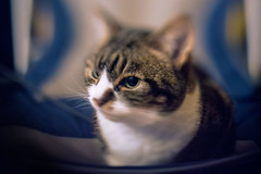 Pixie (Del Robertson) Tags: portrait pixie using freelensing lens whacking manual flash with 12 cto gel 081216