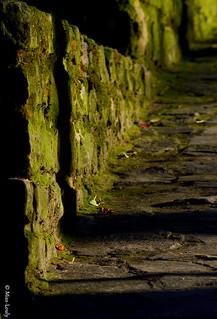 10498- Un mur couvert de mousse...
