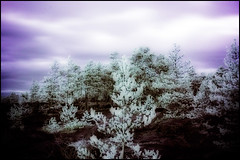 Planet X (Jonas Thomn) Tags: manipulated ir infrared falsecolours