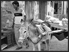 On the streets of Alsisar (Deb Jones1) Tags: people bw 1 jones explore deb indiarajasthan flickrduel alsisar faunaanimalspeopleplacestravelstreetfoodcanonbeauty debjones1