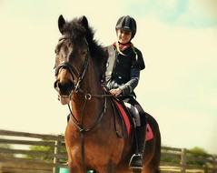 Cheeky Pony! (Sammi Celleste Photography) Tags: horse animal sport nikon outdoor riding pony 1855mm 1855 equestrian equine horsephotography