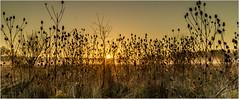 Winther Sunset_005 (Anthony Britton) Tags: canonesom3 1855mlens thamesfield wraysburyberkshire sunsets mistmornings twilight frosty photoshop